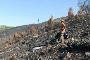 Atividade vai decorrer na área afetada pelo incêndio em Loriga (Seia), no parque natural da Serra da Estrela